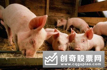 """湖北:""""真金白银""""支持生猪生产促行业转型"""