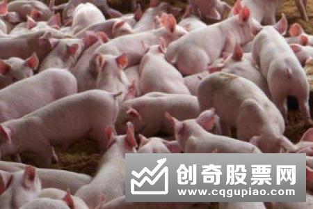 """一个400多万头生猪产能的养殖大市如何""""养成""""?——广东生猪产能恢复见闻"""